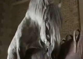 Grey horse bangs his girlfriend from behind