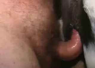 Cute little pony gets banged hard from behind